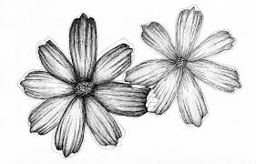 Aster September Birth Flower Black and White