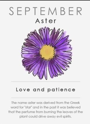 Birth Flower For September