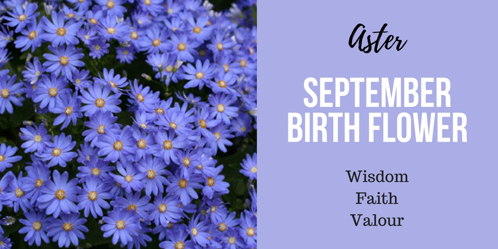Birth Flower Of September