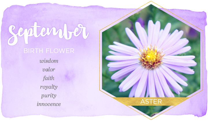 September Birth Flower Meaning