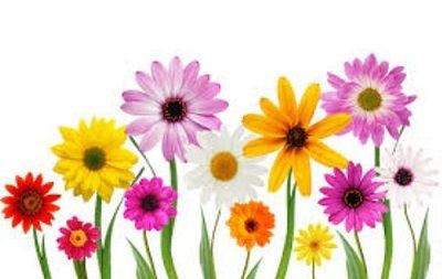 may flowers clipart