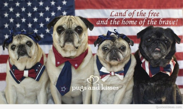 Funny July 4th Pictures