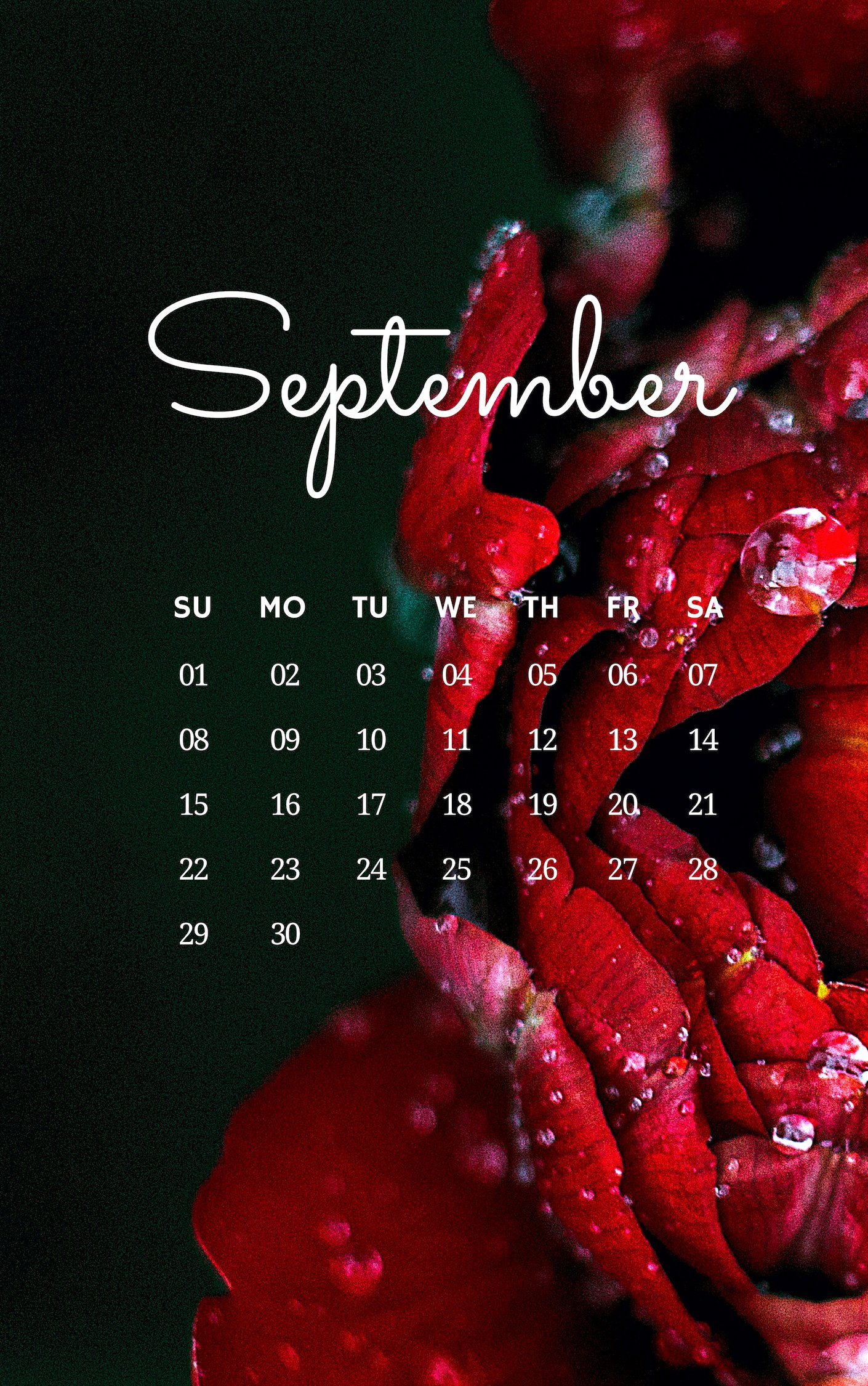 September 2019 iPhone Flower Wallpaper