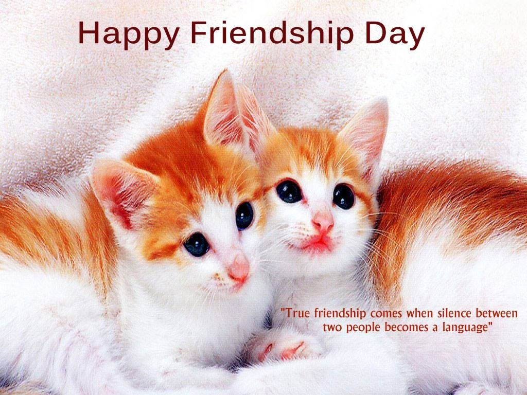 Funny Happy Friendship Day Message Sayings